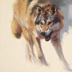 Wolf Study IV by Julie Chapman