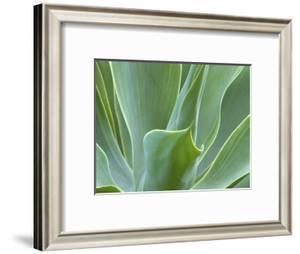 Agave Plant, Maui, Hawaii, USA by Julie Eggers