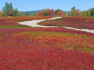 Blueberry Barrens, Maine, USA by Julie Eggers