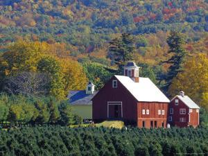 Christmas Tree Farm near Springfield in Autumn, Vermont, USA by Julie Eggers