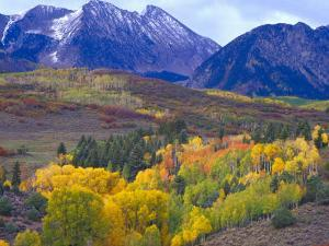 Colorful Aspens in Logan Canyon, Utah, USA by Julie Eggers
