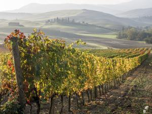 Europe, Italy, Tuscany. Autumn Vineyards in Bright Colors by Julie Eggers