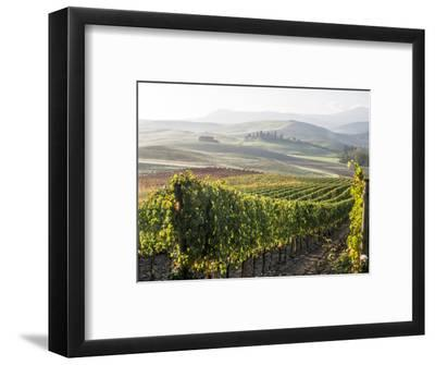 Europe, Italy, Tuscany. Autumn Vineyards in Bright Colors
