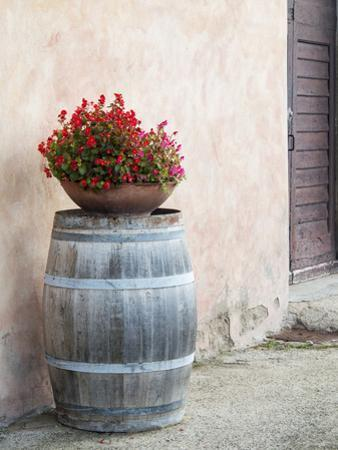 Europe, Italy, Tuscany. Flower Pot on Old Wine Barrel at Winery