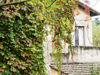 Europe, Italy, Tuscany. Ivy Covered House in the Town of Impruneta by Julie Eggers