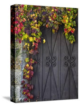 Italy, Tuscany, Contignano. Door Surrounded by Fall Colored Ivy