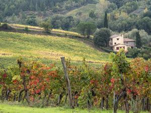 Italy, Tuscany. Farm House and Vineyard in the Chianti Region by Julie Eggers