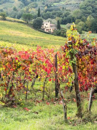 Italy, Tuscany. Farm House and Vineyard in the Chianti Region