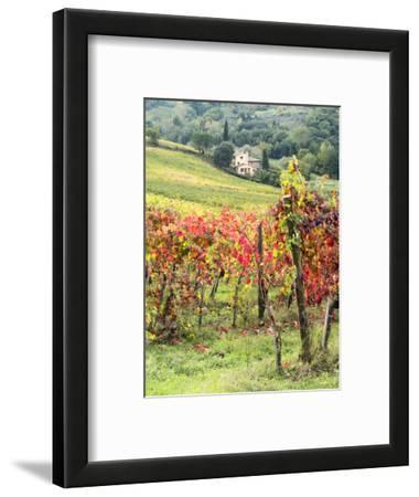 Italy, Tuscany. Farm House and Vineyard in the Chianti Region
