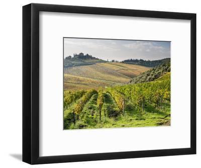 Italy, Tuscany. Rows of Vines and Olive Groves Carpet the Countryside