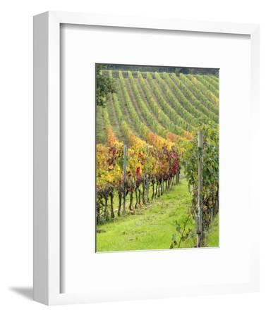 Italy, Tuscany, Val Dorcia. Colorful Vineyards in Autumn