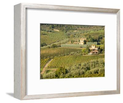 Italy, Tuscany. Vines and Olive Groves of a Rural Village
