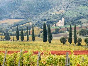 Italy, Tuscany. Vineyard and Olive Trees with the Abbey of Sant Antimo by Julie Eggers