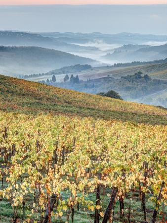 Italy, Tuscany. Vineyard with Foggy Valley Beyond in Chianti Region by Julie Eggers