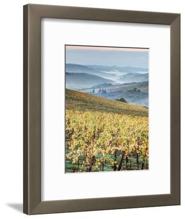 Italy, Tuscany. Vineyard with Foggy Valley Beyond in Chianti Region