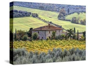 Italy, Tuscany. Vineyards and Olive Trees in Autumn by a House by Julie Eggers