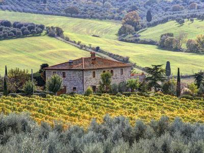 Italy, Tuscany. Vineyards and Olive Trees in Autumn by a House