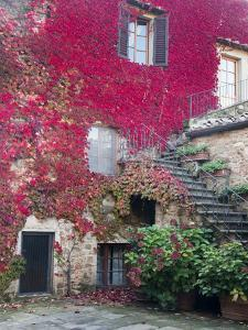 Italy, Tuscany, Volpaia. Red Ivy Covering the Walls of the Buildings by Julie Eggers