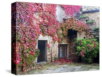 Italy, Tuscany, Volpaia. Red Ivy Covering the Walls of the Buildings