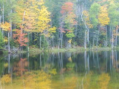 Michigan, Upper Peninsula. Fall Colors on Thornton Lake, Alger Co by Julie Eggers