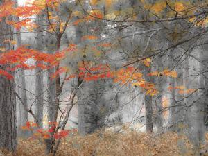 Michigan, Upper Peninsula. Forest of Maples and Ferns by Julie Eggers