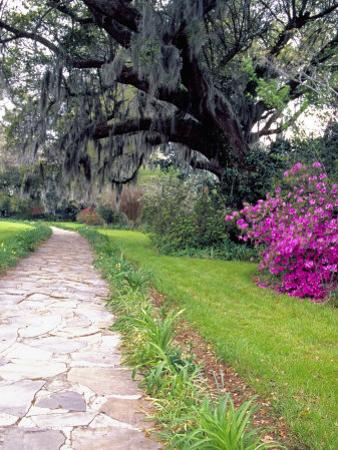 Pathway in Magnolia Plantation and Gardens, Charleston, South Carolina, USA by Julie Eggers