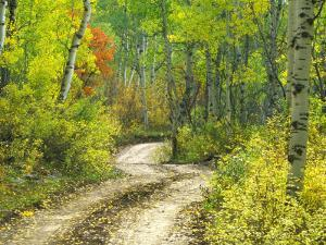 Road with Autumn Colors and Aspens in Kebler Pass, Colorado, USA by Julie Eggers