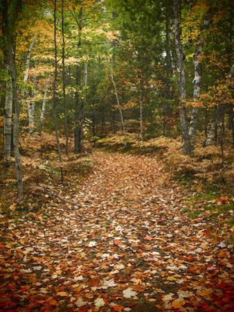 USA, Michigan, Upper Peninsula. Leaf Lined Trail in the Hiawatha NF by Julie Eggers