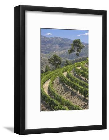 Vineyards of the Douro Valley, Pinhao, Portugal
