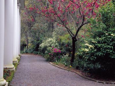 Walkway in Gardens, Magnolia Plantation and Gardens, Charleston, South Carolina, USA
