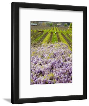 Workers in Vineyards with Wisteria Vines, Groth Winery in Napa Valley, California, USA