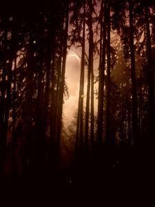 Autumn Night by Julie Fain