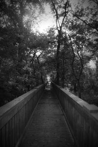 Black And White Walkway by Julie Fain