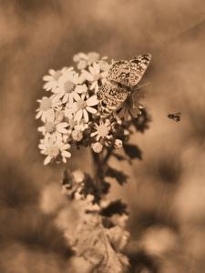 Butterfly Flowers by Julie Fain