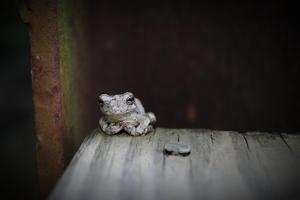 Frog by Julie Fain