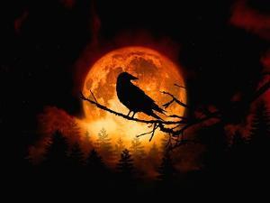 Harvest Moon by Julie Fain