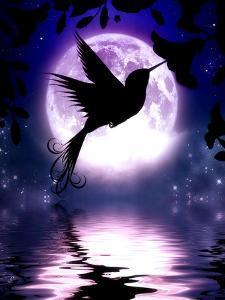 Moonlit Hummingbird by Julie Fain