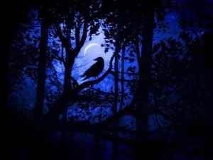 Nightwatch by Julie Fain