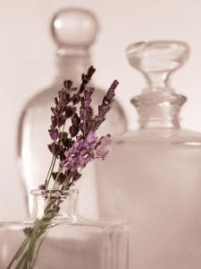 Lavender Detail by Julie Greenwood