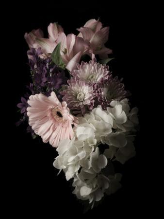 Midnight Gerbera by Julie Greenwood