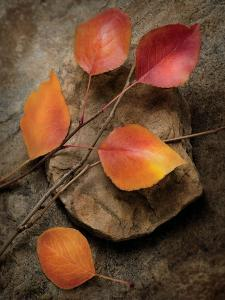 Quiet Nature Fall Collection 3 by Julie Greenwood