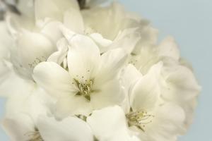 Summer Whites by Julie Greenwood