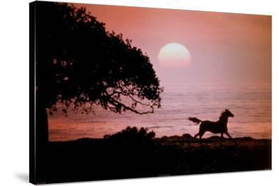 Running Horse At Sunset