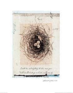 Bird's Nest by Julie Nightingale