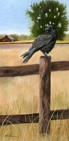 Crow by Julie Peterson