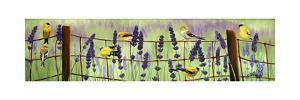Gold Finch and Lavender by Julie Peterson