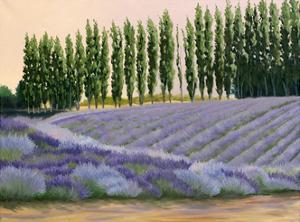 Greysmarsh Lavender by Julie Peterson