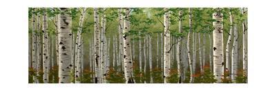 Summer Birch Forest-Julie Peterson-Art Print
