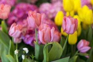 New York City, NY, USA. Floral Displays for Spring by Julien McRoberts
