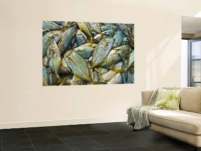 Jumble of Freshly Caught Sea Fish-Tim Makins-Wall Mural